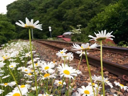 お花と線路