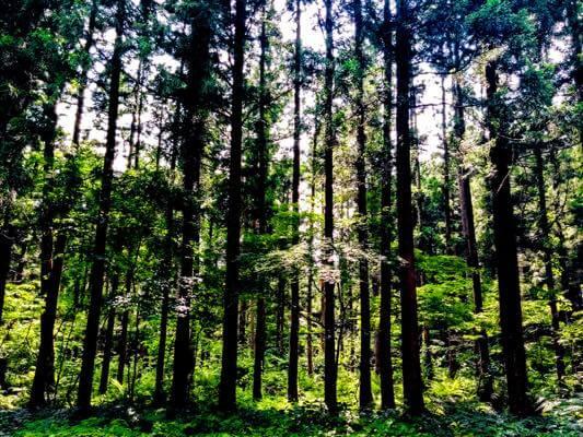 神々しい森の風景