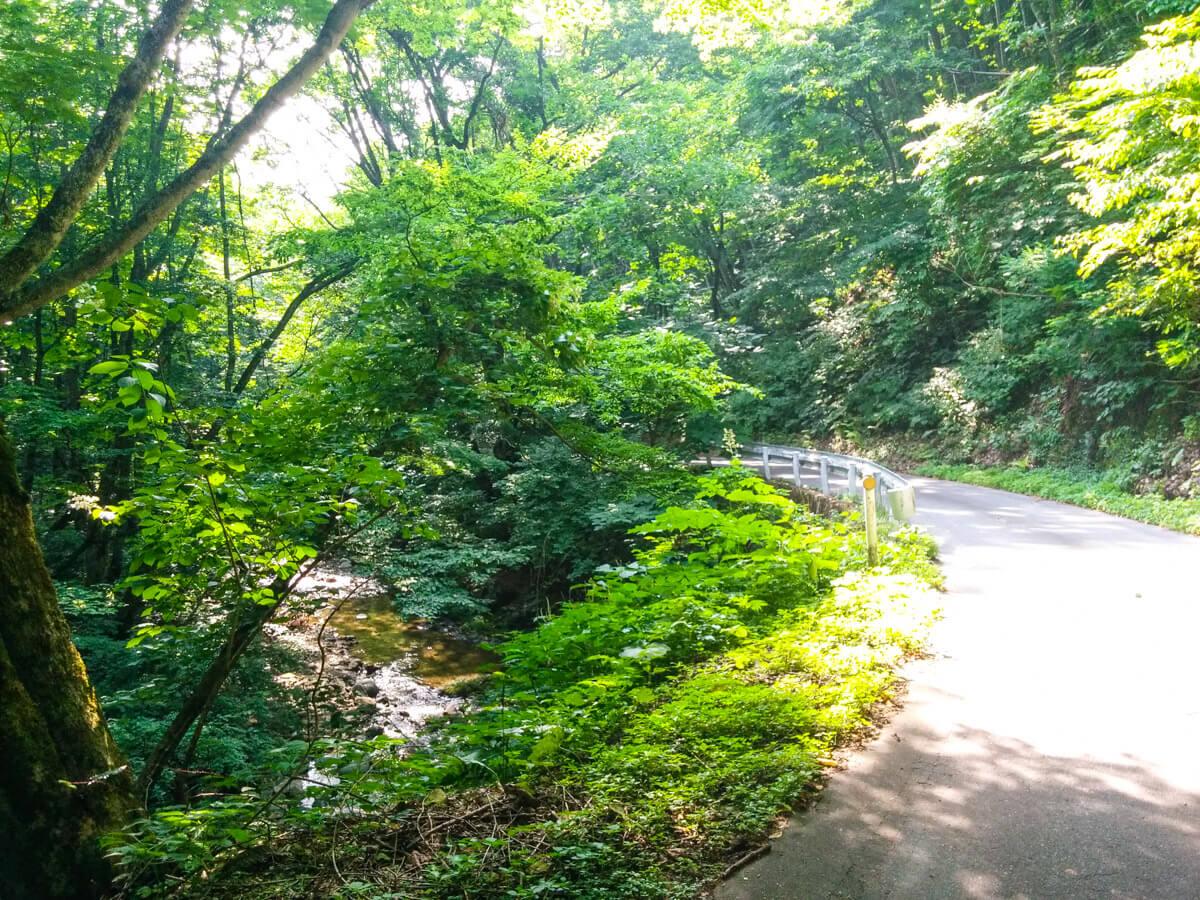 渓流と県道234号